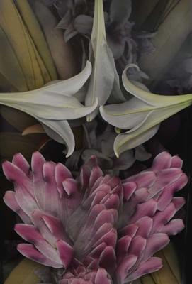 Light Lilies