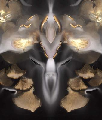 Fungus White