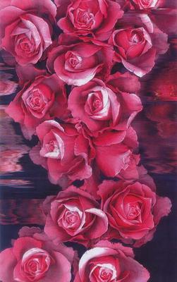 My Rose Memories